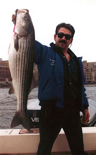 Joe C striper.jpg (25730 bytes)